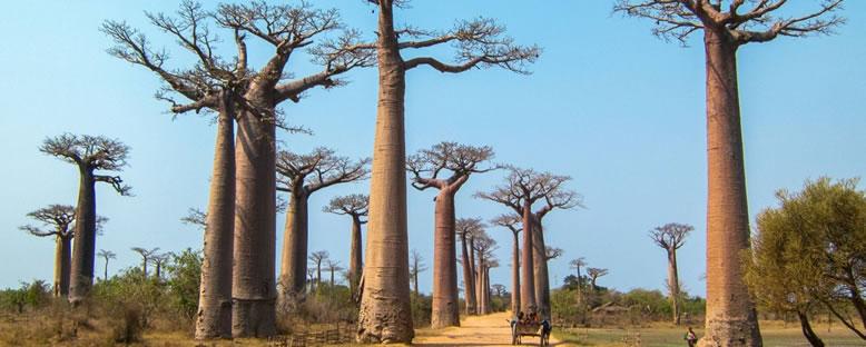 Baobab Ağaçları - Morondava