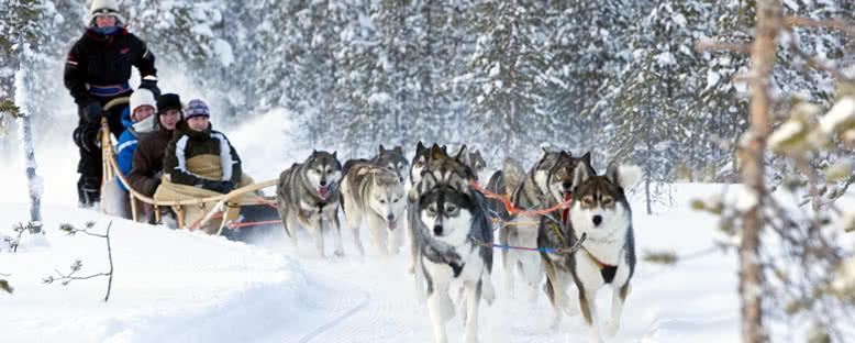 Husky Kızakları - Rovaniemi