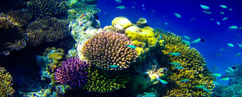 Su Altı Zenginlikleri - Maldivler